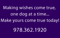 Dog Obedience Training in Billerica, MA 978-362-1920